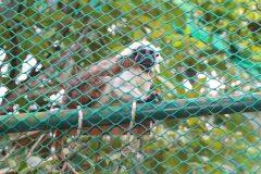 fauna-silvestre-10
