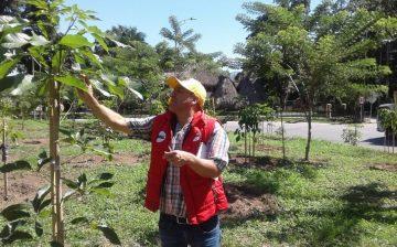 AMB realiza actualización del inventario forestal metropolitano para establecer el estado fito-sanitario de 9 mil 500 árboles