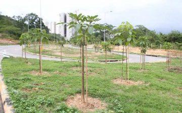 Apadrine un árbol: buscamos aliados para sembrar miles de árboles en las 4 ciudades del área metropol