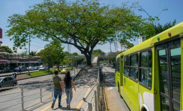 AMB inicia cronograma de visitas para elaborar fichas técnicas de silvicultura urbana a ejemplares forestales postulados por la comunidad, dentro de la campaña '100 árboles íconos del área metropolitana'