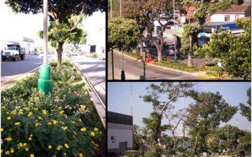Proyecto De Mejoramiento  Paisaje Urbano – Separadores