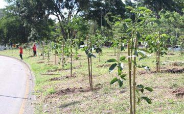 El Plan Forestal Metropolitano alcanzó la cifra de 5.906 árboles plantados. La meta es sembrar miles de árboles más
