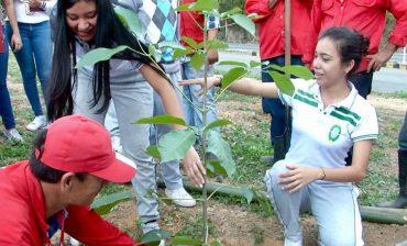 La Subdirección Ambiental del AMB se descentraliza el miércoles 18 de septiembre durante jornada de siembra de 250 árboles en el barrio Colorados de Bucaramanga